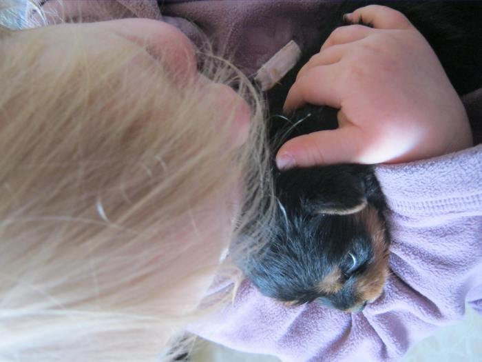 Lola dog (2)