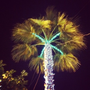 The two-tone lights on this palm tree are so pretty.