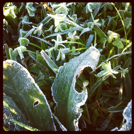Yes, we do get frost here in southern Spain.