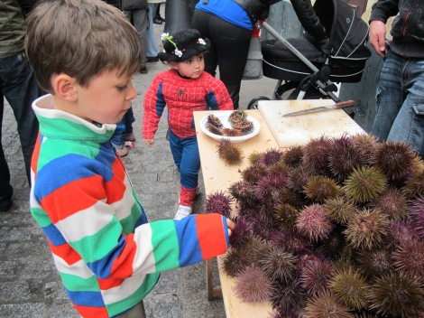 erizos, sea urchins, erizo, sea urchin, Carnaval, Cadiz, Carnaval de Cadiz, family