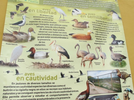 Some of the bird species you can see at Cañada de los Pajaros.