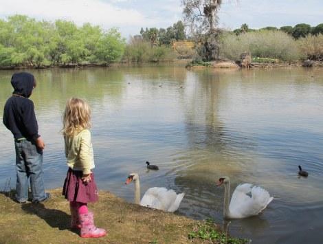 swan, lake, Cañada de los Pajaros