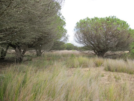 junco, corral, choza, dune, Doñana, UNESCO