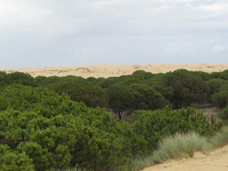 corral, dune, pine, Doñana, UNESCO