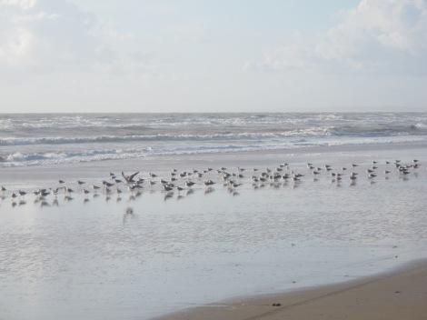 Doñana, beach