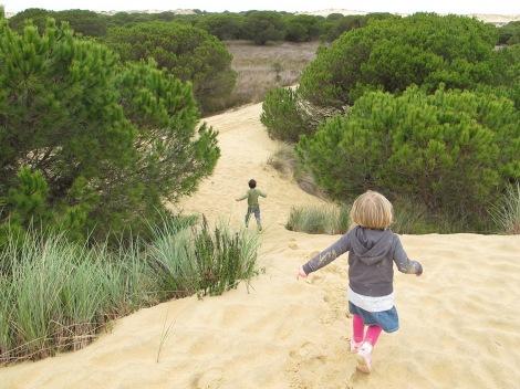 pine, sand dune, Doñana, Huelva, Spain, protected, National park