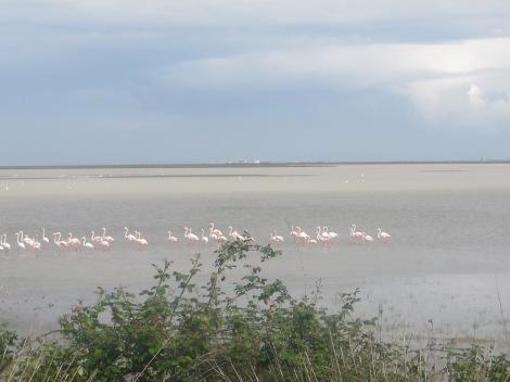 marisma, marismas, Doñana, bird, bird-watching, ornithology