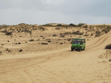 Doñana, dune, Huelva, Spain