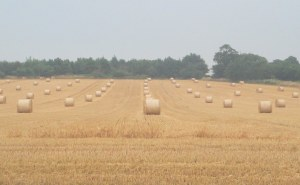 Golden bales of straw in a Suffold field.