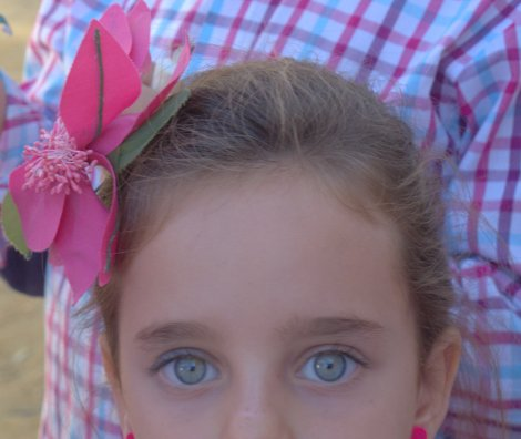 This hibiscus flower is the new fashion for flamenca hair accessories.