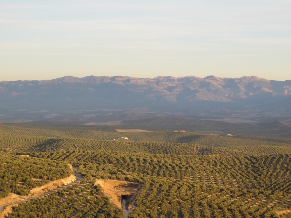 The view from Ubeda's Mirador (viewing point) to La Loma, with the Cortijo Spiritu Santo on the far left.